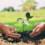 Agroquantum e l'agricoltura sostenibile