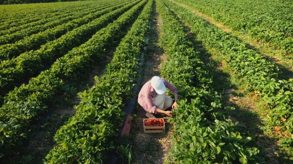 agricoltura sana